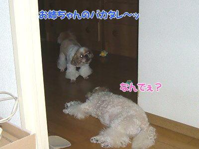 image1373.jpg