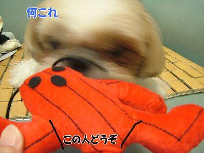 image1376.jpg