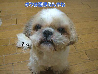 image1383.jpg
