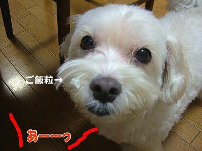 image1389.jpg