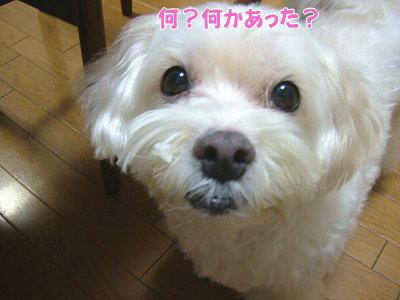image1390.jpg