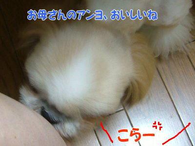 image1393.jpg