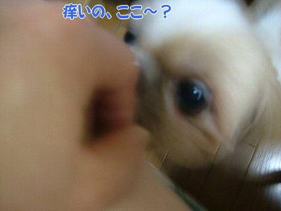 image1395.jpg