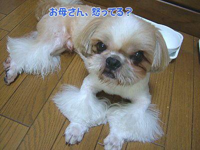 image1397.jpg