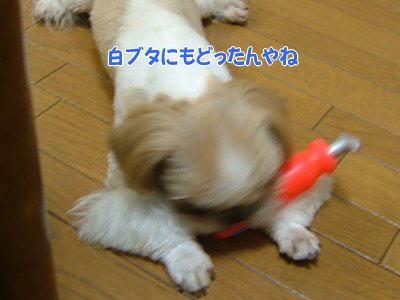image1400.jpg