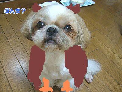 image1403.jpg
