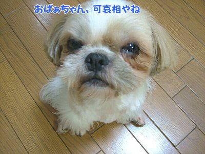 image1404.jpg