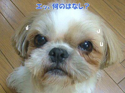 image1405.jpg