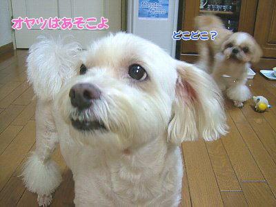 image1457.jpg