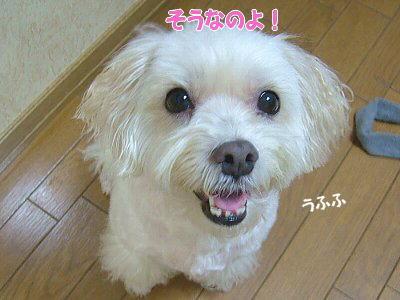 image1470.jpg
