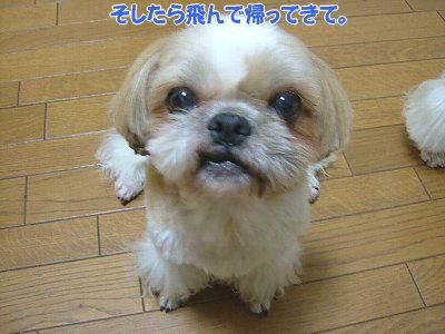 image1485.jpg