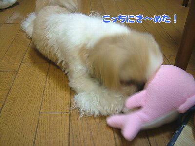 image1837.jpg