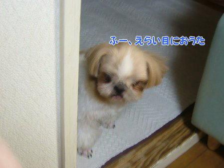 image2044.jpg
