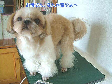 image2046.jpg