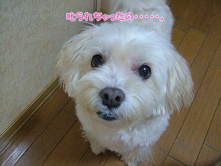 image2059.jpg