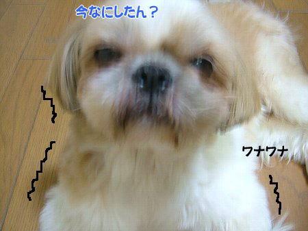 image2069.jpg