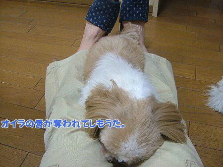 image2071.jpg