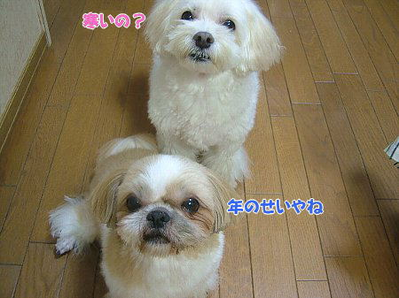 image2075.jpg