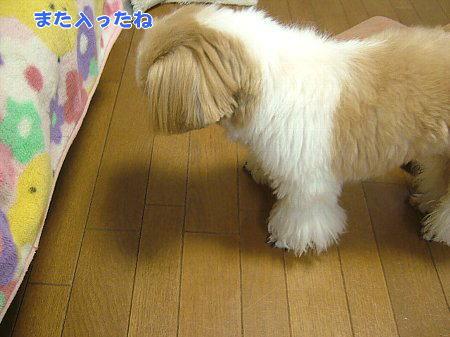 image2085.jpg