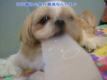 image2088.jpg