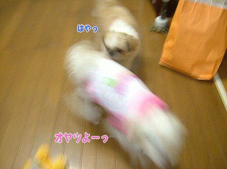 image2170.jpg
