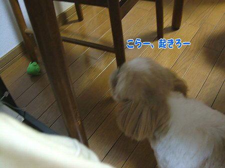 image2186.jpg