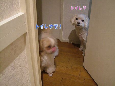image2238.jpg