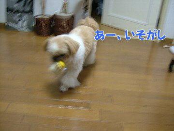 image227.jpg