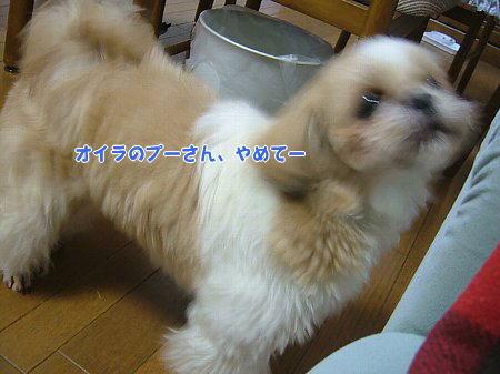 image2307.jpg