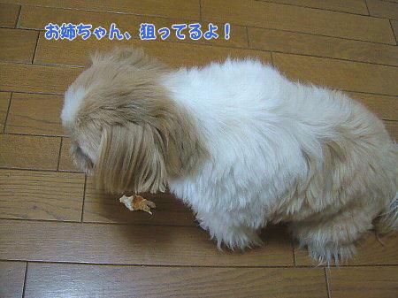 image2309.jpg
