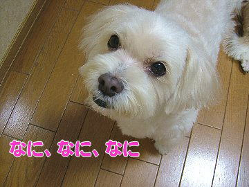image242.jpg
