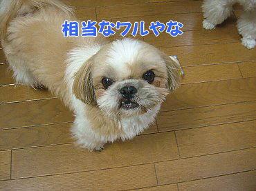 image271.jpg