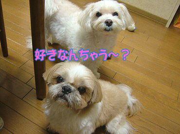 image304.jpg