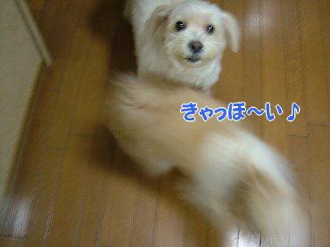 image316.jpg