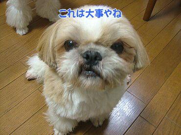 image321.jpg