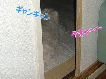 image425.jpg