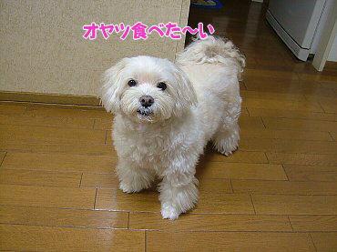image459.jpg