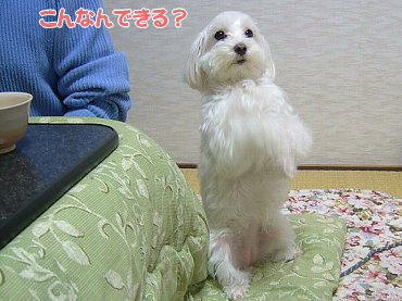 image480.jpg
