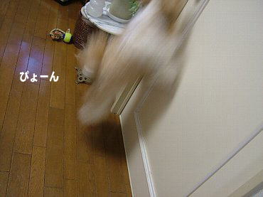 image535.jpg