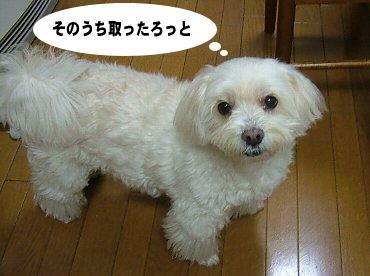 image546.jpg