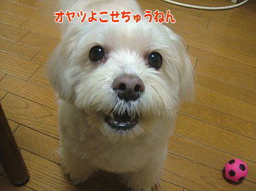 image568.jpg