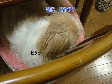 image591.jpg