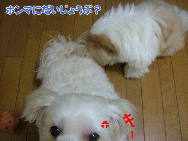 image637.jpg