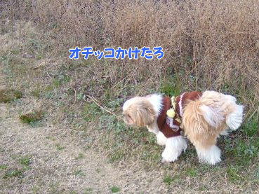 image642.jpg