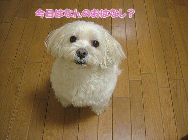 image663.jpg
