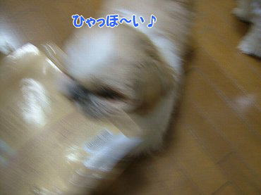 image666.jpg
