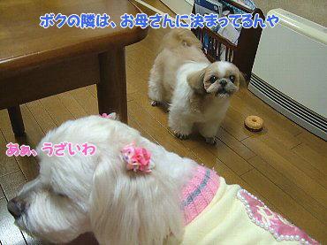 image699.jpg