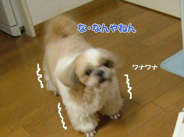 image739.jpg