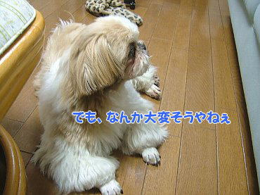 image748.jpg