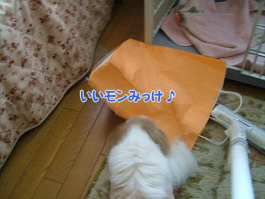 image767.jpg
